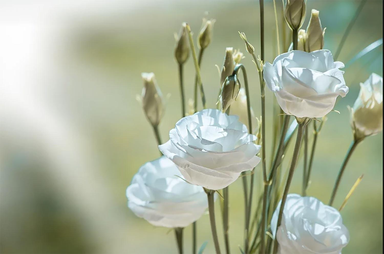 Rosen Hochzeit Pixabay